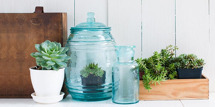 succulents-and-houseplants