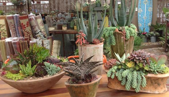 North Park Nursery San Diego Succulents